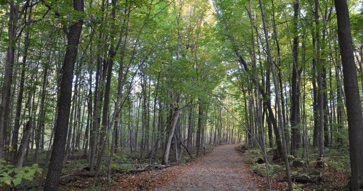 Aménagement d'un nouveau sentier accessible ami des aînés au bois de l'Équerre